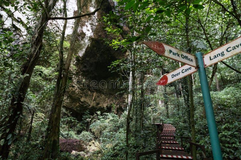 醒来在足迹上的游人入Mulu国家公园 免版税库存照片