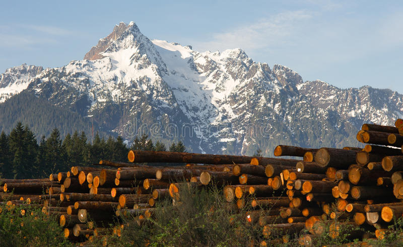 采伐的阵营Whithorse山达灵顿华盛顿被堆积的Lo 库存图片