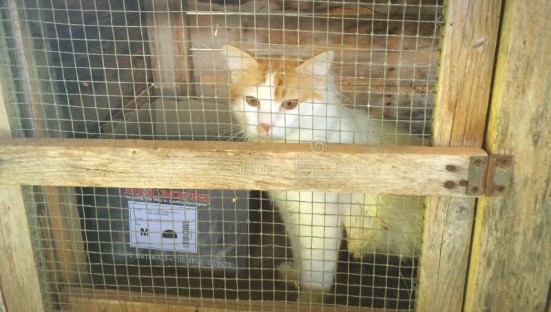 采取一只猫 免版税库存图片