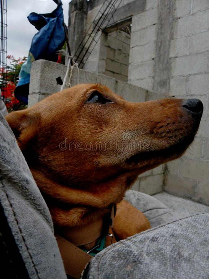 采取休息的宠物在安静的天 图库摄影