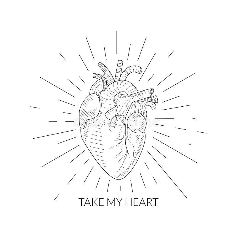 采取我的心脏行情,人的心脏解剖剪影,单色手拉的传染媒介例证 向量例证