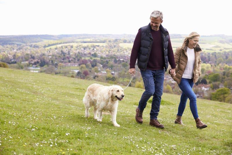 采取步行的成熟夫妇金毛猎犬 免版税库存照片