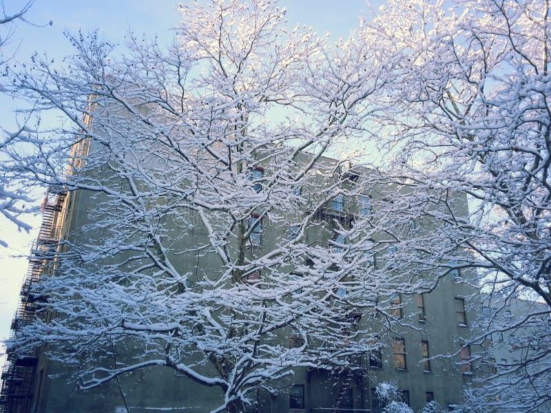 采取积雪的树的呼吸 库存照片