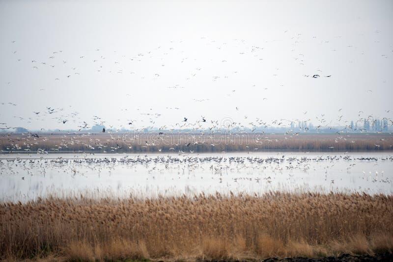 采取飞行的鸟群  免版税库存照片