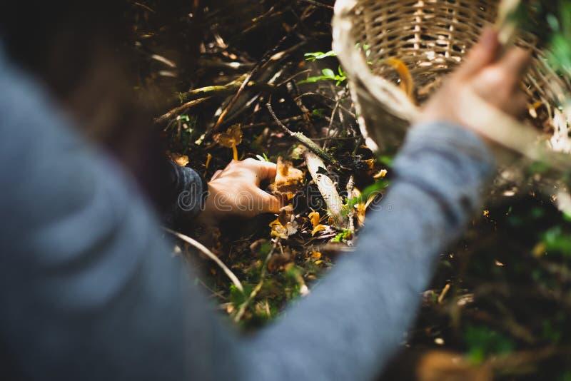 采摘与篮子的妇女黄色脚蘑菇 免版税库存照片