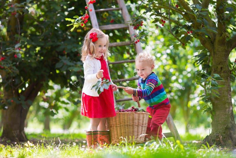 采摘在果子农场的孩子樱桃 免版税库存照片