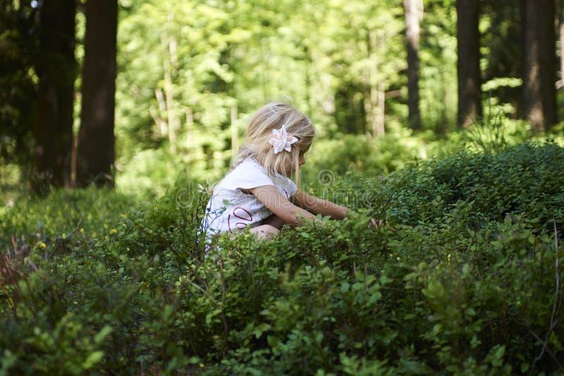 采摘在蓝莓领域的儿童白肤金发的小女孩新鲜的莓果在森林里 库存图片