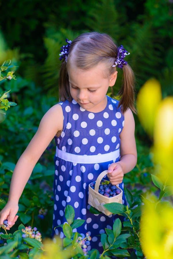采摘在蓝莓领域的小女孩新鲜的莓果-在organi 图库摄影
