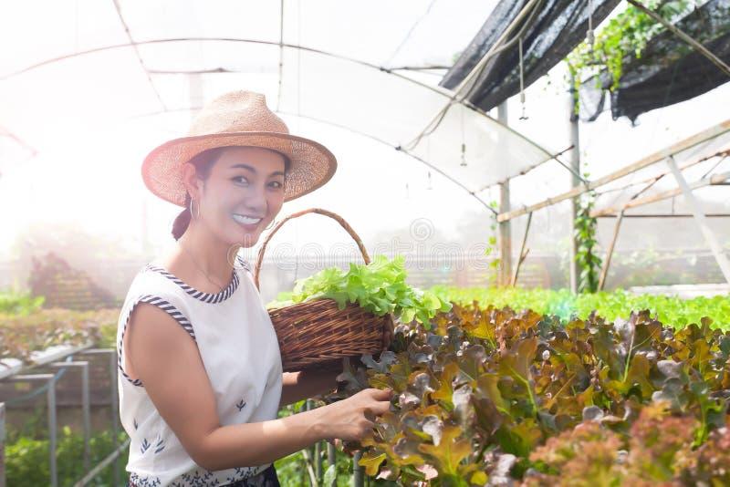 采摘沙拉菜的美丽的亚裔妇女在水栽法农场 健康的概念 免版税库存图片