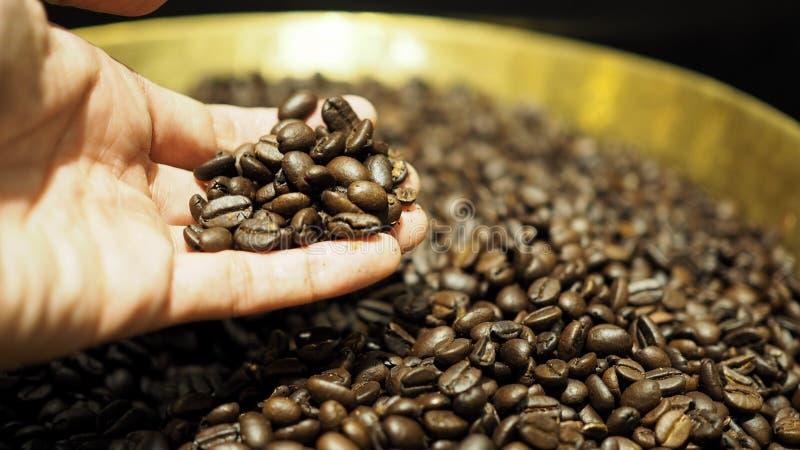 采摘烤咖啡豆特写镜头的手 免版税库存照片