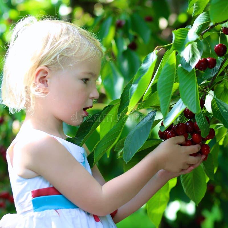 采摘甜樱桃的可爱的女孩在果树园 免版税图库摄影