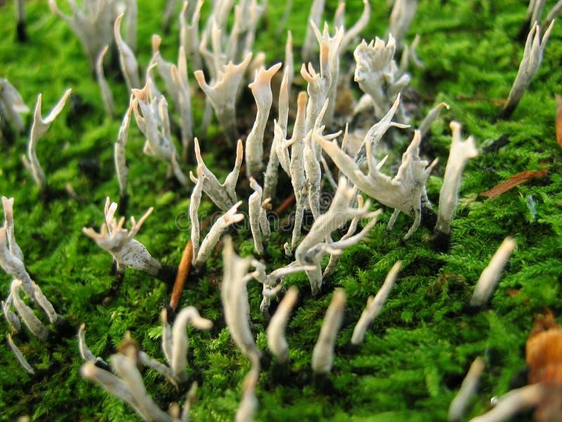 采蘑菇小 免版税库存图片