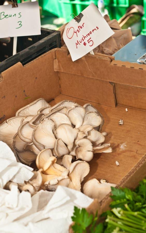 采蘑菇有机牡蛎 免版税库存图片