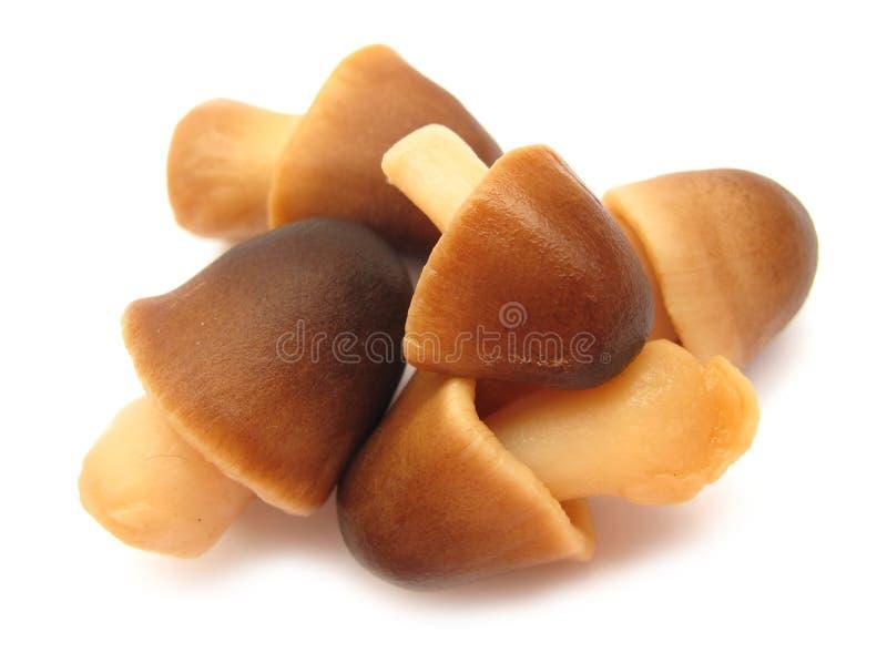 采蘑菇稻秸杆 库存照片