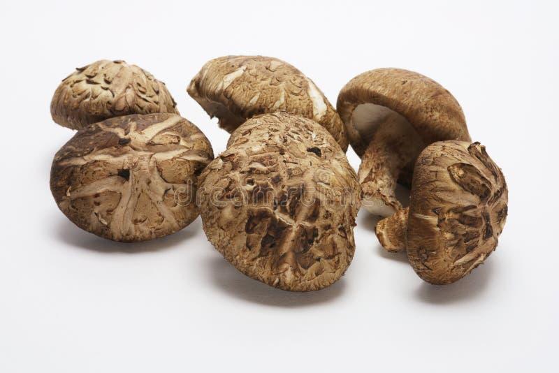 采蘑菇shitake 免版税库存照片