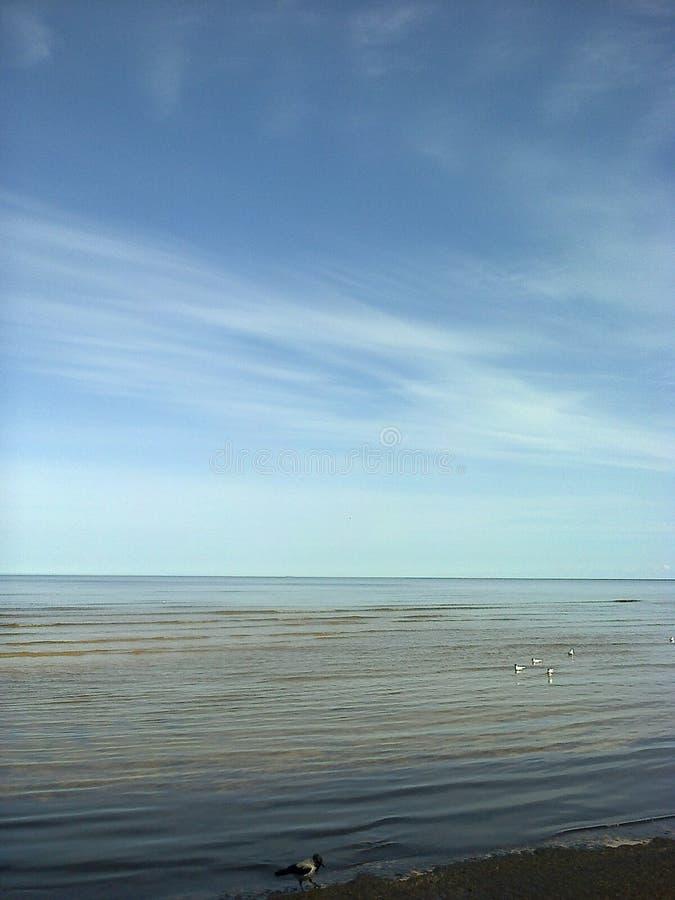 里加海湾 库存照片
