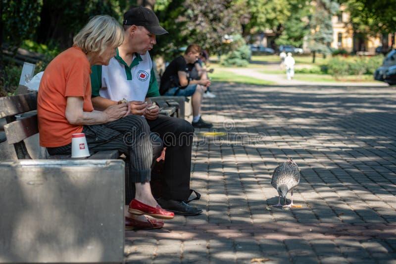 里加,拉脱维亚- 2018年7月31日:坐在城市的两三位老人在长凳和喂养停放鸥 图库摄影