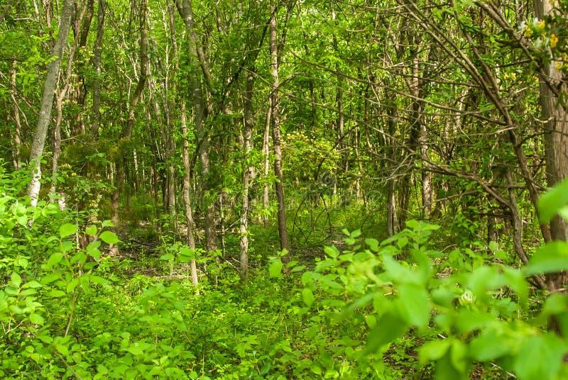 重下木树木繁茂的得克萨斯 库存图片