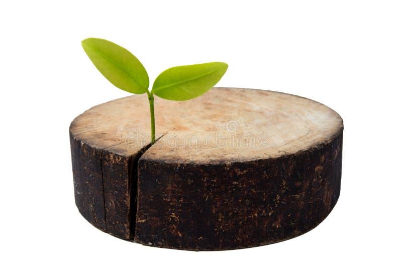 重新造林和保护想法作为与砧板和植物的一个环境概念 库存图片