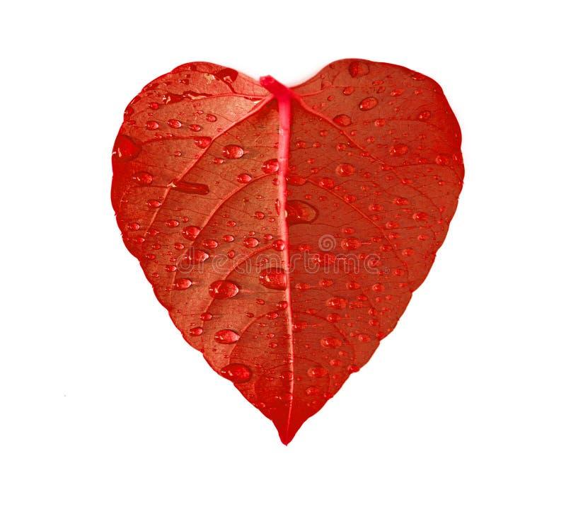 重点叶子红色 免版税库存照片