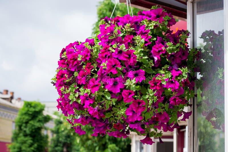 重点离开罐紫罗兰 在街道上的五颜六色的装饰花 Entranc 免版税库存照片