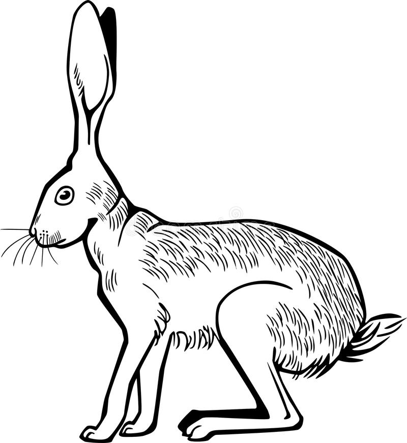 野兔蹲下 向量例证