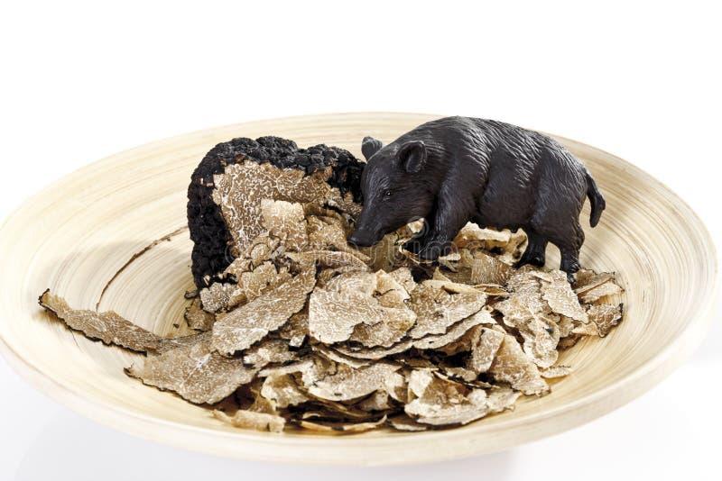 野公猪和黑块菌切片 图库摄影