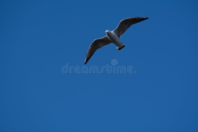 野兽鸟 免版税图库摄影
