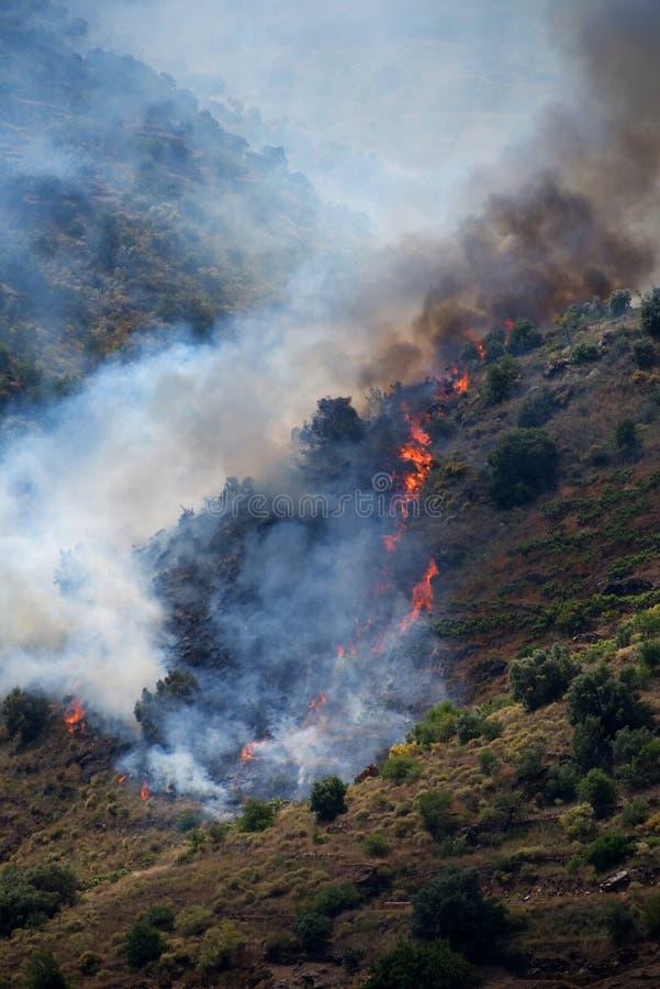 野火火焰横跨在Sayalonga和竞技场之间的西班牙乡下传播了 库存图片
