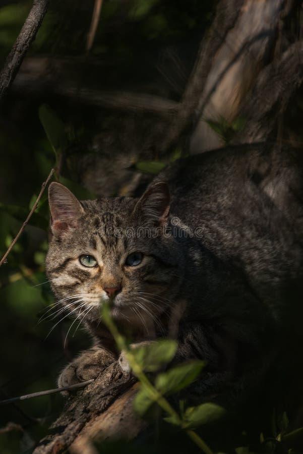 野猫蹲下了在植被附近 库存照片