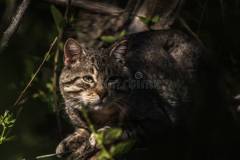 野猫蹲下了在植被附近 免版税库存图片