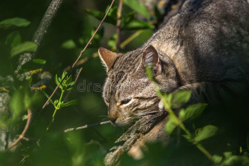 野猫蹲下了在植被附近 免版税图库摄影