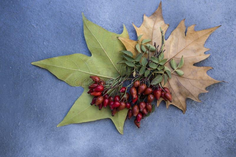 野玫瑰果和干叶子 库存照片