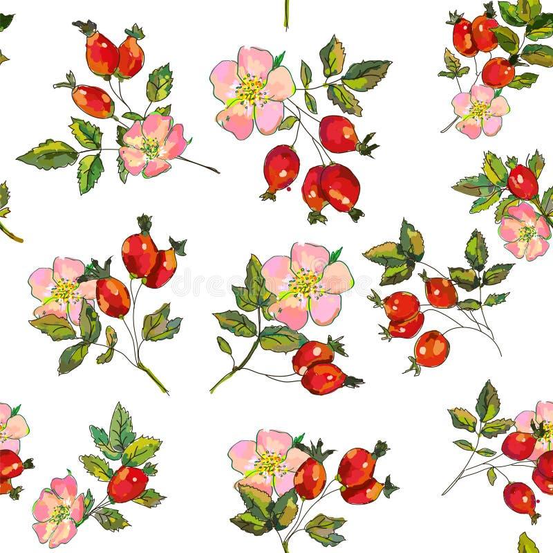 野玫瑰果莓果和花无缝的样式 也corel凹道例证向量 向量例证