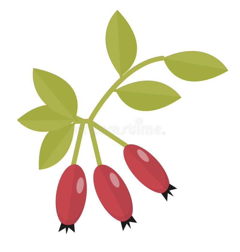野玫瑰果象舱内甲板或动画片样式 在白色背景隔绝的山楂树 红色秋天莓果对象 向量 向量例证