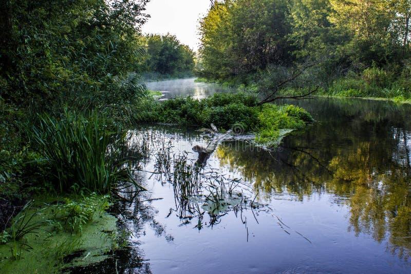 野生丛林的河 免版税图库摄影