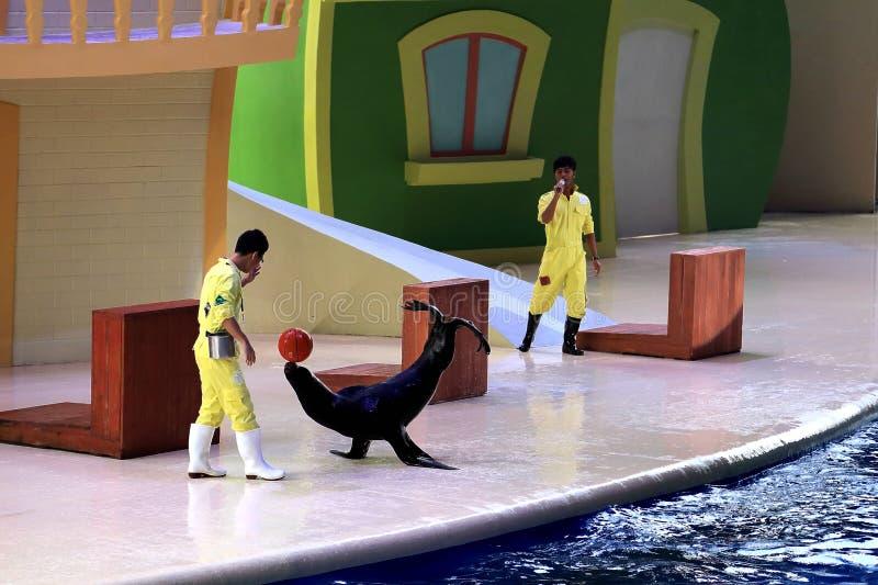 野生动物和鱼在水族馆 免版税库存照片