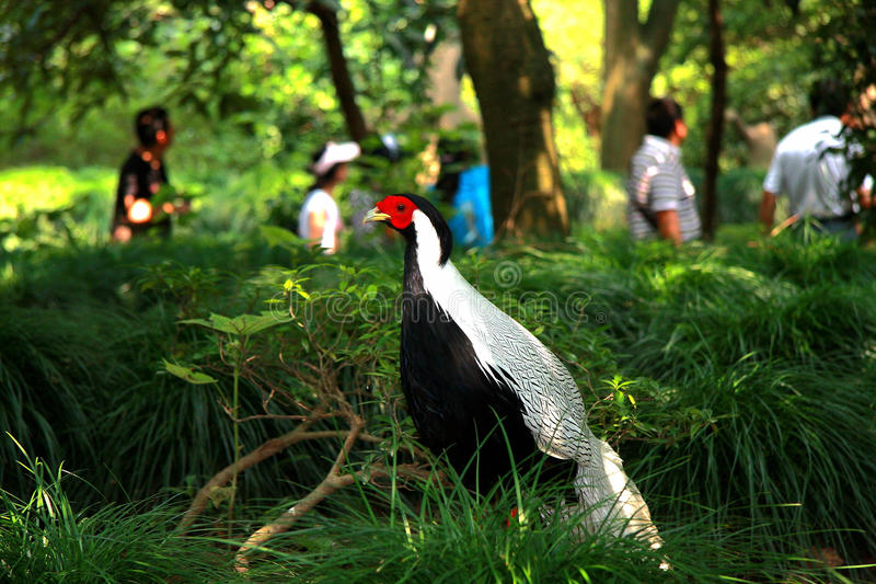 野生动物和鸟在深圳徒步旅行队停放 免版税图库摄影