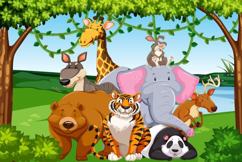 野生动物在森林里 向量例证