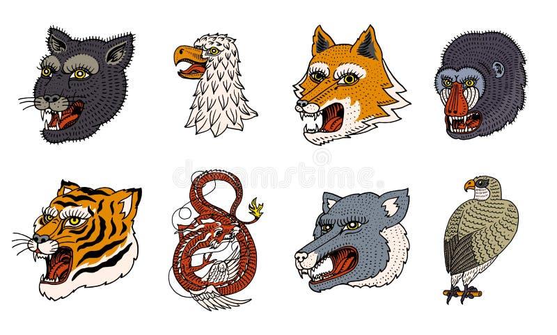 野生动物掠食性动物头  美洲狮狼Fox老虎老鹰猎鹰猴子面孔和中国龙 日本风格画象 库存例证