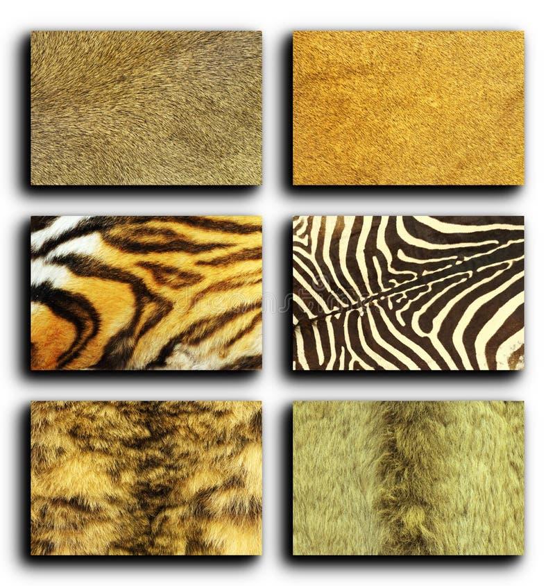 野生动物毛皮的汇集 库存照片