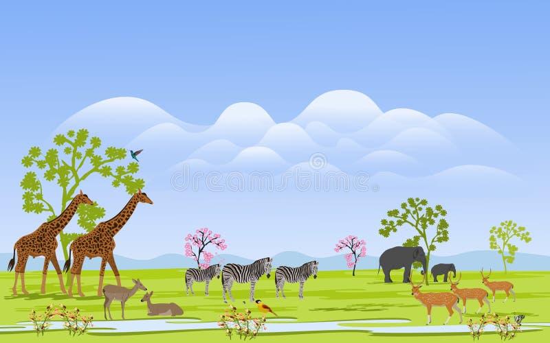 野生动物牧群在那里绿草领域的是山和群在背景中 皇族释放例证