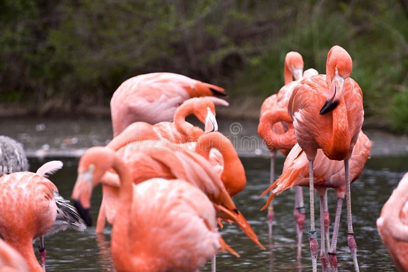 野生动物 图库摄影