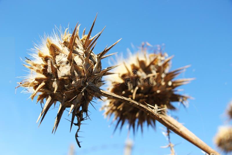 野生棘手的植物从下面 免版税库存图片