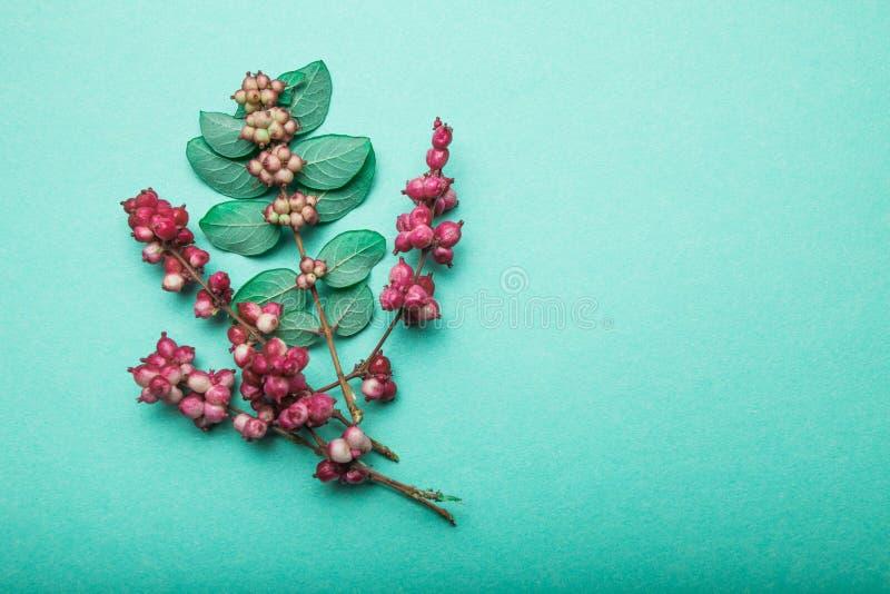 野生森林草、红色莓果和叶子在绿色背景 r 免版税库存照片