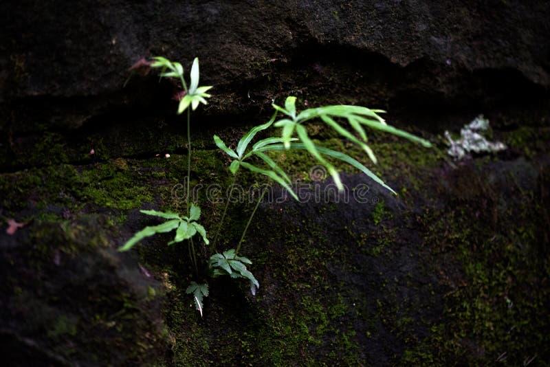 野生植物特点  库存照片