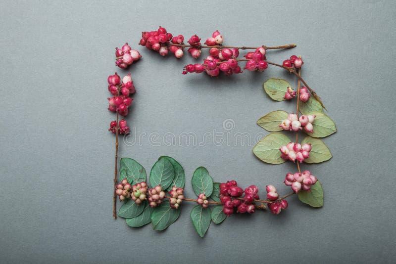 野生植物秋季葡萄酒框架用在灰色背景的红色莓果 库存照片