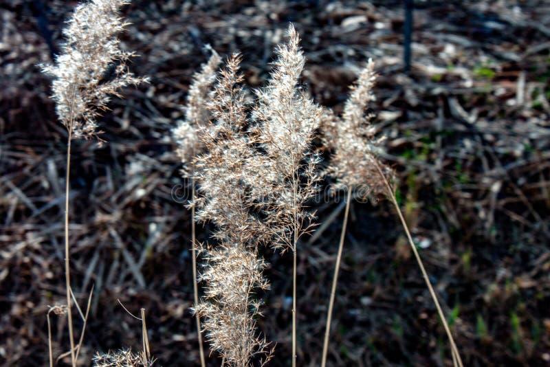 野生植物被弄脏的背景有相交的温暖和冷的颜色的 图库摄影