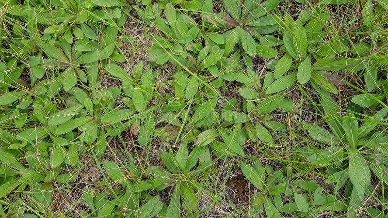 野生植物顶视图小灌木  库存图片