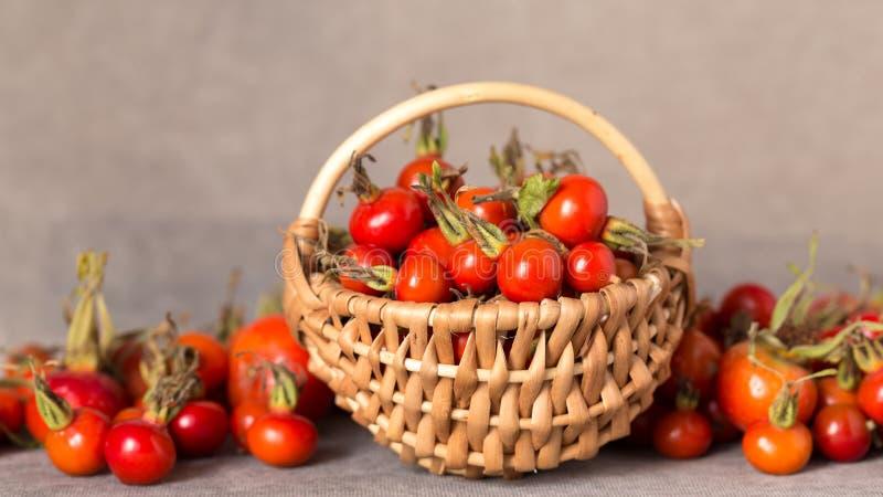 野生玫瑰色莓果收获  免版税图库摄影